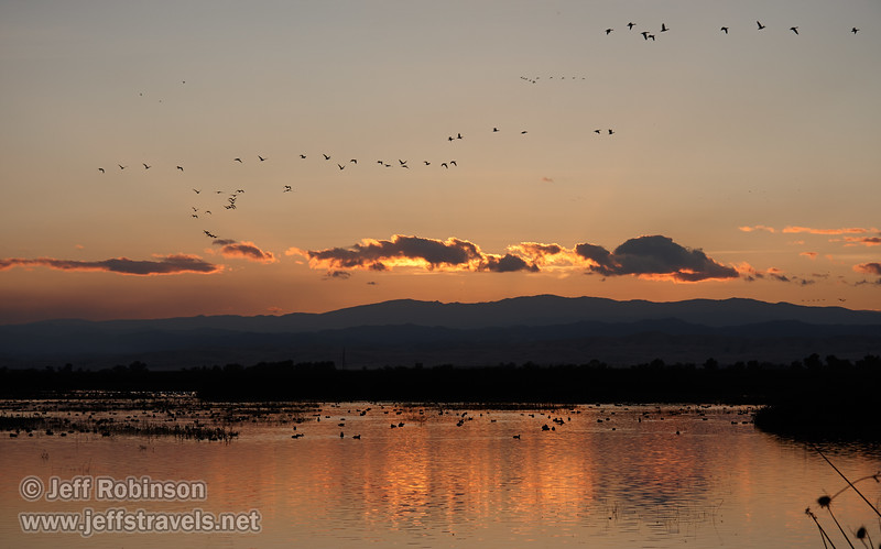 Geese in the water at sunset, with more birds flying in the sky, and backlit sunset clouds reflected in the water. (11/10/2012, Sacramento National Wildlife Refuge)
