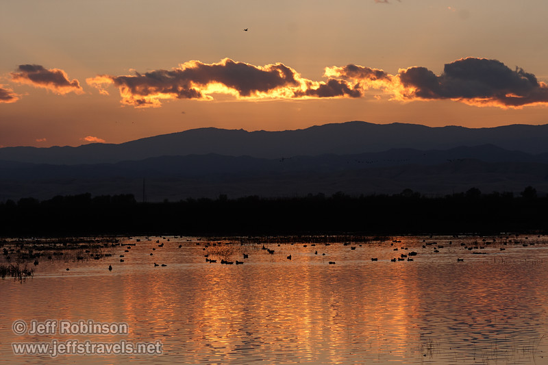 Geese in the water at sunset, with backlit sunset clouds reflected in the water. (11/10/2012, Sacramento National Wildlife Refuge)