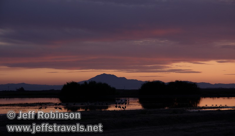 Gorgeous sunset with pink clouds and orange sky reflected in the water with silhouetted sandhill cranes (10/4/2009, Isenberg Sandhill Crane Reserve near Lodi, CA)