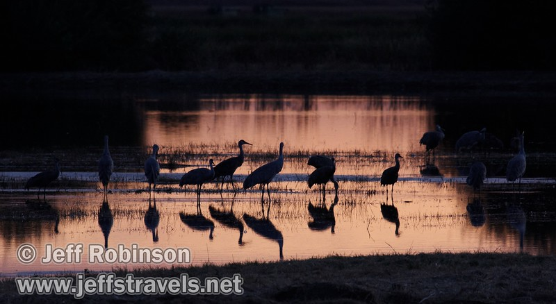 Silhouetted sandhill cranes in a pond reflecting sunset colors (10/4/2009, Isenberg Sandhill Crane Reserve near Lodi, CA)