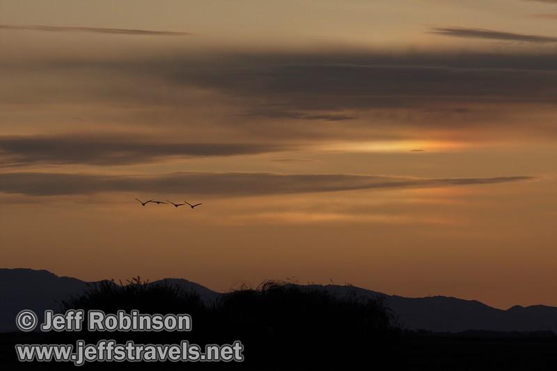 Four distant sandhill cranes flying against skyline including a sundog (10/4/2009, Isenberg Sandhill Crane Reserve near Lodi, CA)