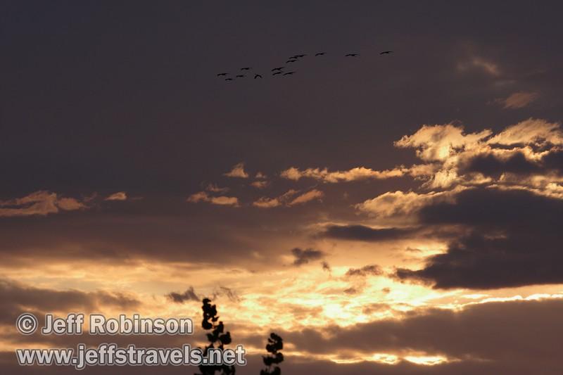A flock of sandhill cranes flying in over a bright-yellow sunset (10/4/2009, Isenberg Sandhill Crane Reserve near Lodi, CA)
