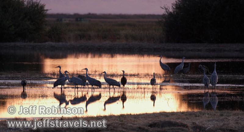 Sandhill cranes in a pond reflecting sunset colors (10/4/2009, Isenberg Sandhill Crane Reserve near Lodi, CA)