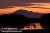 A flock of sandhill cranes in a pool reflecting sunset colors with Mt. Diablo behind (10/4/2009, Isenberg Sandhill Crane Reserve near Lodi, CA)