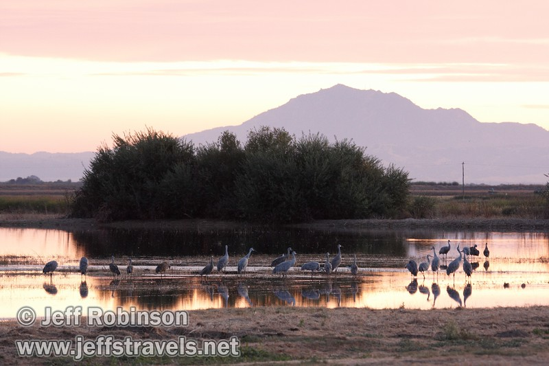 Sandhill cranes in a pond reflecting sunset colors with Mt. Diablo in the background (10/4/2009, Isenberg Sandhill Crane Reserve near Lodi, CA)