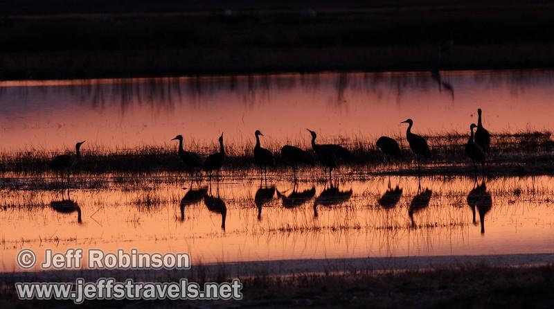 A large flock of sandhill cranes in a pool reflecting pink sunset colors (10/4/2009, Isenberg Sandhill Crane Reserve near Lodi, CA)