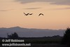 Three sandhill cranes flying in against sunset colors, mountains, and the foreground bushes (10/4/2009, Isenberg Sandhill Crane Reserve near Lodi, CA)