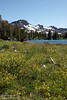 Southerly view of a green meadow filled with yellow flowers and purple lilies, located at the east edge of Frog Lake. Frog Lake and Round Top Mountain with snow patches are beyond. (8/13/2011, Carson Pass to Frog Lake hike)<br /> EF-S17-85mm f/4-5.6 IS USM @ 28mm f13 1/320s ISO320