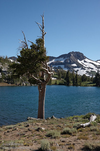 Southerly view of a wind-blown pine (white pine?) on the shore of Frog Lake, with Round Top mountain with patches of snow in the background. (8/13/2011, Carson Pass to Frog Lake hike)<br /> EF-S17-85mm f/4-5.6 IS USM @ 30mm f10 1/400s ISO200