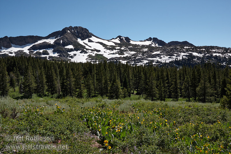 Southerly view of a meadow of yellow Mule Ears flowers (plants with broad leaves) and purple Lupine, with forrest and snow-patched Round Top Mountain under blue sky in the background. (8/13/2011, Carson Pass to Frog Lake hike)<br /> EF-S17-85mm f/4-5.6 IS USM @ 26mm f13 1/200s ISO160