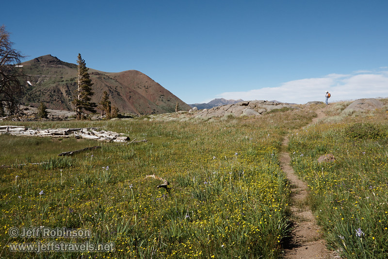 Trail through a green meadow filled with yellow flowers and purple lilies, located at the east edge of Frog Lake. Lynda is on the rocks at the far end of the trail, and Red Lake Peak is on the left (8/13/2011, Carson Pass to Frog Lake hike)<br /> EF-S17-85mm f/4-5.6 IS USM @ 20mm f13 1/320s ISO320