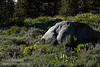 Green Mule Ears with its yellow flowers and purple lupine grow around a granite boulder. (8/13/2011, Carson Pass to Frog Lake hike)<br /> EF-S17-85mm f/4-5.6 IS USM @ 85mm f10 1/200s ISO200