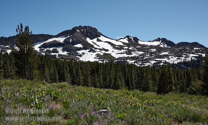 Southerly view of a meadow of yellow Mule Ears flowers (plants with broad leaves) and purple Lupine, with forrest and snow-patched Round Top Mountain under blue sky in the background. (8/13/2011, Carson Pass to Frog Lake hike)<br /> EF-S17-85mm f/4-5.6 IS USM @ 28mm f13 1/200s ISO160
