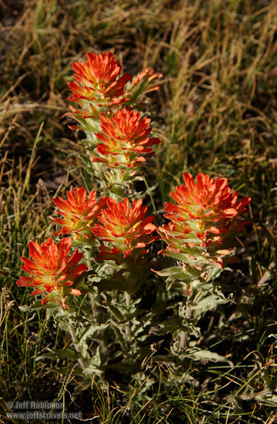 Some variety of Paintbrush with green leaves shifting to light-red flowers on top. (Possibly a variety of Applegate Paintbrush.) (8/13/2011, Frog Lake, Carson Pass to Frog Lake hike)<br /> EF-S17-85mm f/4-5.6 IS USM @ 68mm f11 1/250s ISO200