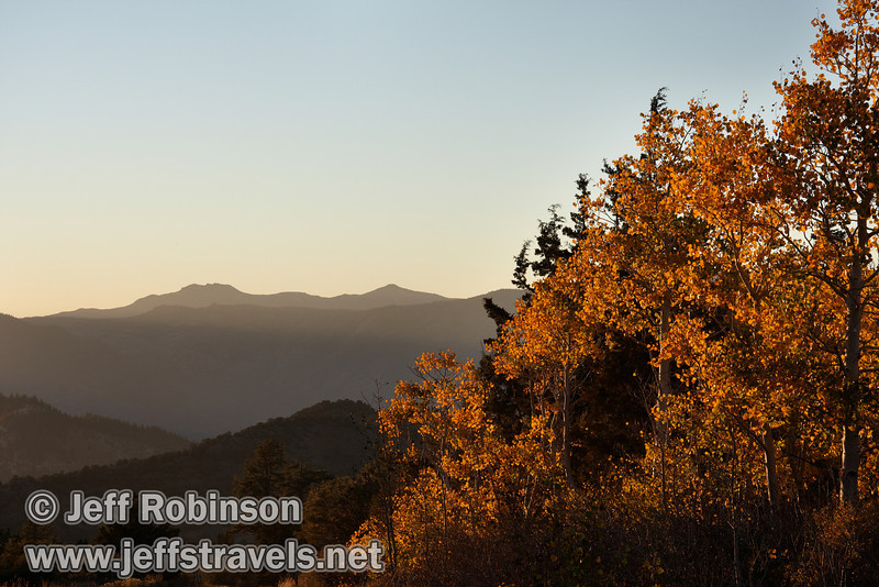 Backlit yellow aspen (with a hint of red) with shaded mountains behind. (10/22/2011, highway 89 climbing to Monitor Pass (west side of summit), Fall Color Drive)