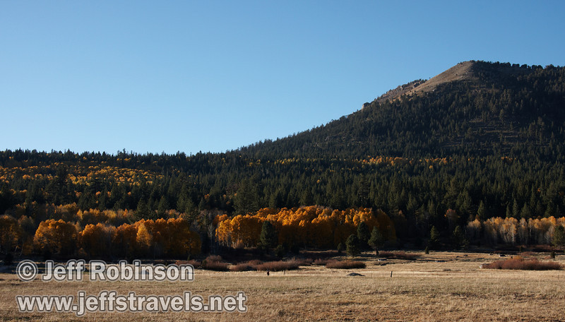 Stands of backlit yellow aspen with green forest, a foreground meadow, and a mountain in the background (10/22/2011, north of highway 88 in Hope Valley, Fall Color Drive)