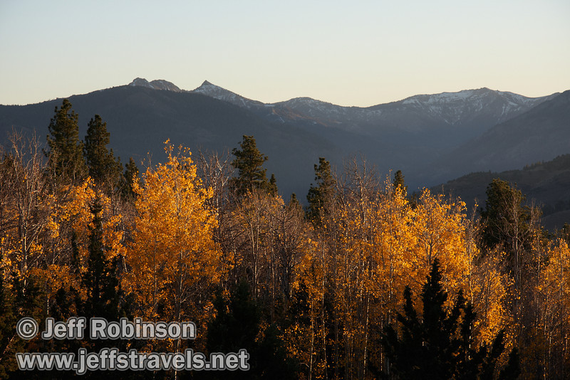 Backlit yellow aspen with shaded mountains with snow in the background. (10/22/2011, highway 89 climbing to Monitor Pass (west side of summit), Fall Color Drive)