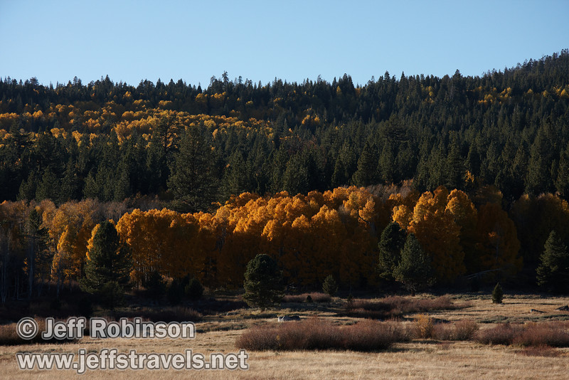 Backlit yellow aspen mixed into a green forest, with a meadow in the foreground (10/22/2011, north of highway 88 in Hope Valley, Fall Color Drive)