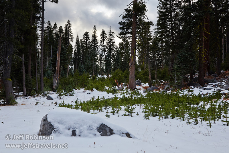 Snow-covered rocks lead to trees and light clouds with a hint of blue sky (11/2/2013, Wrights Rd.)<br /> EF24-105mm f/4L IS USM @ 50mm f8 1/332s ISO400