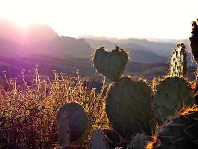 Cactus and Ridges