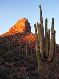Cactus & Butte