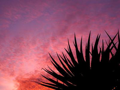 Yucca Sky