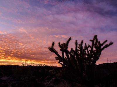 Cactus and Sunrise