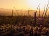 Cactus Sunlight