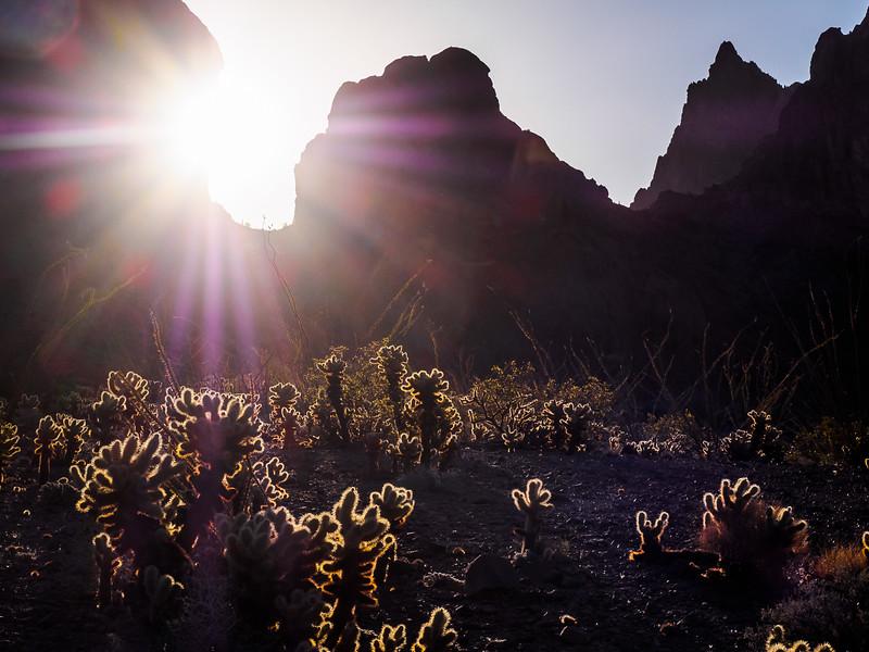 Kofa Sunrise