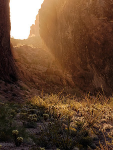 Kofa Sunbeam