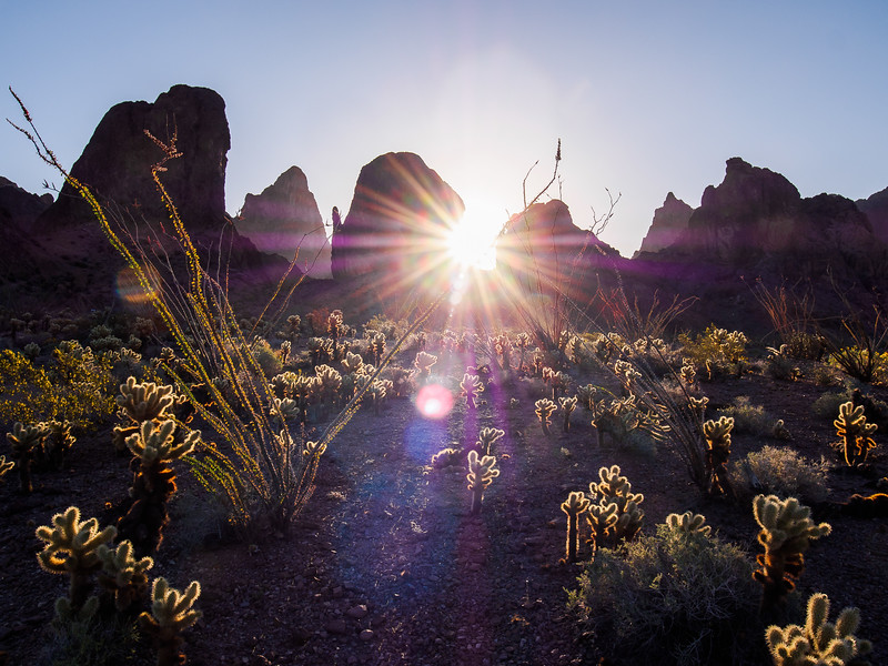 Sunburst over the Cactus Garden