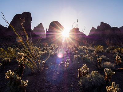 Sunburst over the Cactus Garden