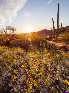 Sunset in the Ajo Mountains
