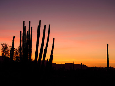 Dawn at Organ Pipe