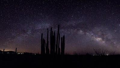 Cactus Stars