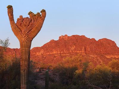 Crested Saguaro and Malpais Hills