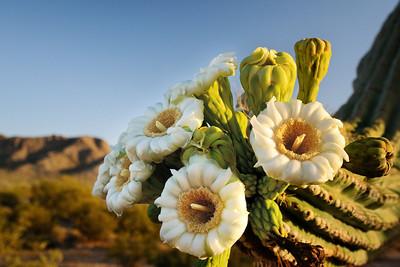 Saguaro Cluster