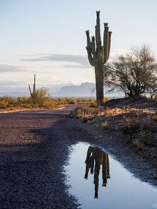 Desert Reflection
