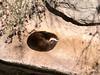 Otter Asleep
