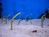 Weird Eels
