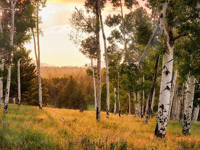 Hart Prairie Sunset