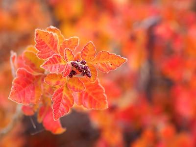 Orange Bush