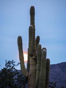 Saguaro and Moon