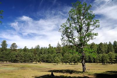 Meadow at Kinder Spring