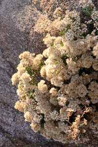 Shrub in the rock
