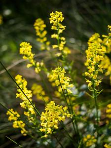 Creekbed Flowers