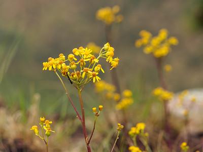 Rim Flowers