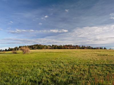 Forested Hilltop
