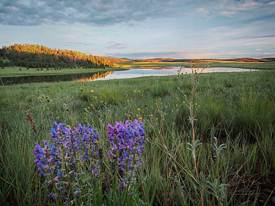 Crescent Lake Wildflowers