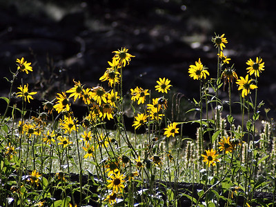 Wildflowers along the river